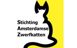 amsterdamse zwerfkatten