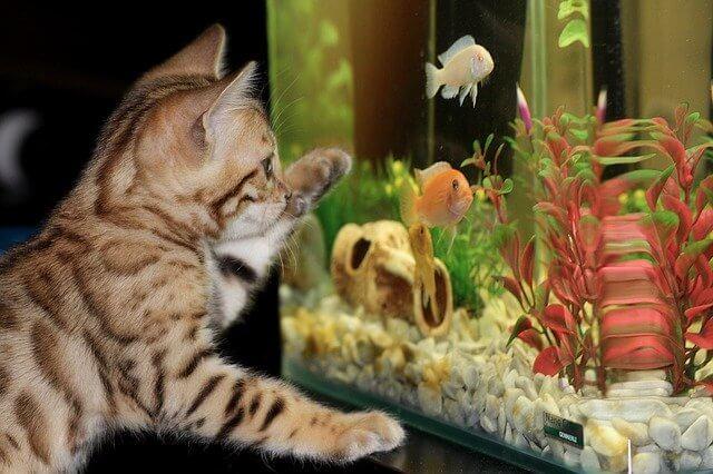 kat en aqarium